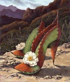 Costume Fleur, Cactus Boots, San Raphael, Cactus Pictures, Fairy Shoes, Snake Skin Dress, Desert Art, Arte Floral, Shoe Art
