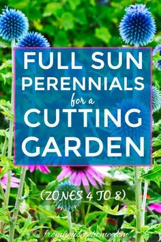 To create a perennial summer cutting garden, you need full sun perennials that are fragrant, have long stems, re-bloom and are low maintenance. This list has a great selection of plants that will work for gardens in zone 4, 5, 6, 7 or 8.   Full Sun Plants Long Blooming Perennials, Best Perennials, Hardy Perennials, Zone 4 Perennials, Perrenial Flowers, Flowers Perennials, Cut Flower Garden, Flowers For Cutting Garden, Cut Garden