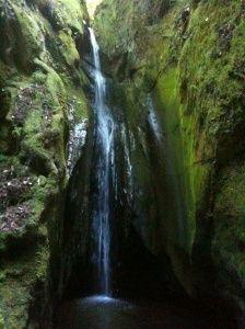 Forest of the Nisene Marks..Santa Cruz, CA...Love it!