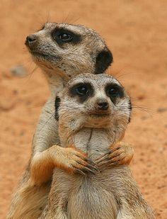 animals in pairs   Best Animal Pairs