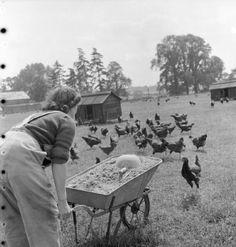 world war ii history magazine Chicken Hut, Chicken Coops, Women's Land Army, White Tractor, Land Girls, Army Girls, British Home, History Magazine, Wheelbarrow