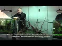TAKASHI AMANO LAYOUT SEMINAR A 120cm aquarium tank No.5 2012.02.22 - YouTube