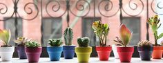 Miniature Succulent Collections - The Sill - New York City Plant Design & Delivery Services for Home & Office