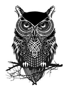 ulchabhan-owl:  My Magic Owl