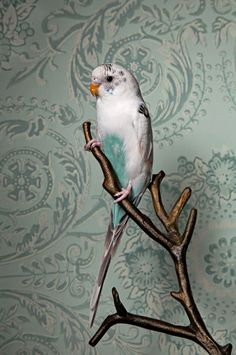 Birds of a Feather | Claire Rosen