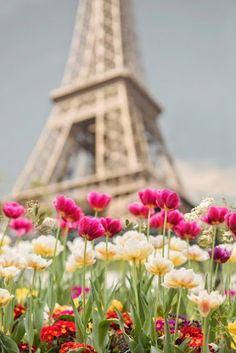 Paris Photography - Tulips at the Eiffel Tower, Paris in Spring, French Home Decor, Large Wall Art Beautiful Paris, I Love Paris, Beautiful World, Beautiful Flowers, Paris Paris, Torre Eiffel Paris, Paris Eiffel Tower, Image Paris, Paris In Spring