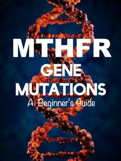 MTHFR Gene Mutations: A Beginner