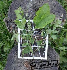"""Решили мы зеленое лето """"увековечить"""" в рамке, создать картины из цветов, травы и листьев. Обычную фоторамку я обмотала  толстыми нитками и предложила вплести в них траву, цветы, составить композиции. Почти как ткацкий станок. Для маленьких детей подойдет рамка со скотчем вместо ниток, на которою легко приклеить траву и цветы! Garden art, loom grass."""