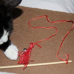 A brincadeira interativa com brinquedos de corda é extremamente importante para o seu gato, afinal ele é um caçador e precisa caçar alguma coisa. Grande parte dos problemas de comportamento em gato…
