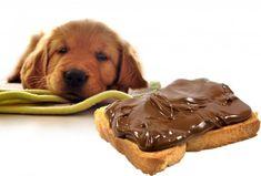 Τι μπορεί να πάθει ένας σκύλος αν φάει σοκολάτα What Dogs, Puppy Food, Bad Food, Eat Fruit, Dog Feeding, Food Preparation, Pet Care, Your Pet, Husky