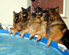 """""""Stay out of the pool"""" they said..hahahaa"""