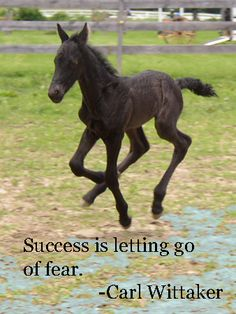 Success is letting go of fear. Visit www.equinespot.com for more equine inspired fun!