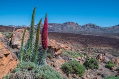 Teide - Tenerife blog