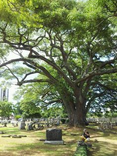 Oahu Cemetry.....I'VE SEEN THIS!!!