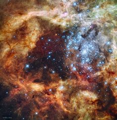 """""""In the center of star-forming region 30 Doradus lies a huge cluster containing some of the largest, hottest, and most massive stars known. These stars, known collectively as star cluster R136, were captured in the featured image in visible light by the Wide Field Camera 3 in 2009 peering through the Hubble Space Telescope."""""""