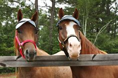 Horse Sun Visor trail riding gear great for by NagHorseRanch, $33.95
