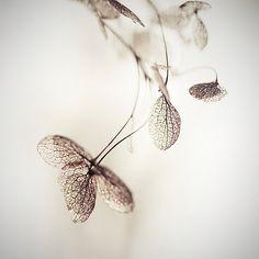 J'ai aimé une fleur, Alain Baumgarten