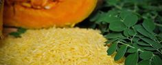 The GMO 'Golden Rice' Experiment was an Ethical Disaster – One Shocking New Development