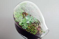 Kiwi / Botany Factory - Terrariums by Katie Goldman Macdonald
