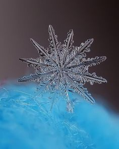 Snowflake and Snow Crystal Photographs I Love Snow, I Love Winter, Winter Snow, Art Et Nature, Science Nature, Snow Scenes, Winter Scenes, Fotografia Macro, Ice Crystals