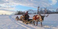 Reindeer sledding, Tromso, Norway