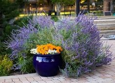Bushes and Shrubs for Shade and Landscaping
