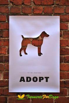 Adopt a dog?
