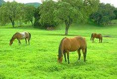 Resultado de imagem para qual e a alimentação do cavalo