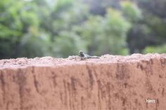 Miniature Photography of soldier - sniper