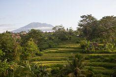 Einen Teil der Elternzeit auf Bali verbringen? Klingt wie ein Traum? Zu schön, um wahr zu sein? Dabei ist diese geschenkte Freizeit, die perfekte Gelegenheit, um sich als Familie unter Palmen eine kleine Auszeit zu gönnen und nebenbei seinem Nachwuchs die große weite Welt zu zeigen. Papa & ich hatten uns in der gemeinsamen Elternzeit …
