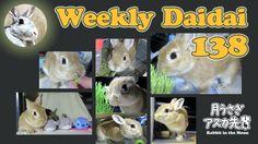 Weekly daidai 138