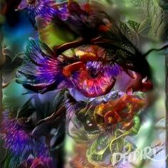 The Fairy's Eye - Crowpickle Art