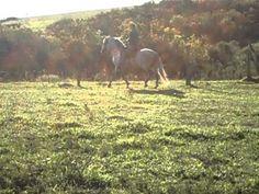 Cavalo Tordilho Bela Cruz
