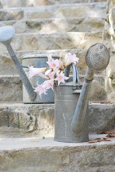 zinc / watering cans .. X ღɱɧღ ||