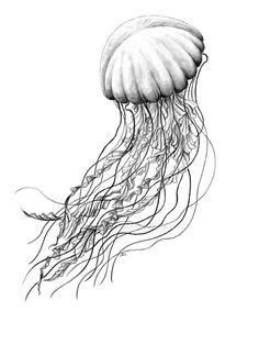 a sea nettle jellyfish i drew it for a t shirt contest at my
