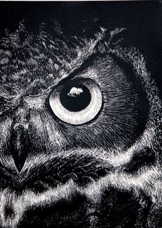 Beautiful owl drawing, I would love a massive print of this on a canvas in my bedroom!