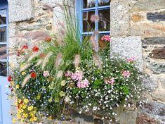 Pour composer des jardinières ayant besoin de peu d'arrosage, suivez nos conseils et découvrez une sélection de plantes adaptées au plein soleil et à la sécheresse, peu gourmandes en eau.