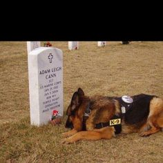 Ultimate loyalty...Soooo sad! This is an incredible story.