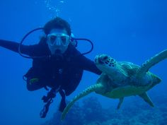 scuba dive images | Hawaii Scuba Diving, PADI Dive certification, Honolulu Scuba Lessons