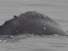 A gray whale has been spotted and photographed off Namibia, marking the first-ever documentation of the species (Eschrichtius robustus) in the Southern Hemisphere.
