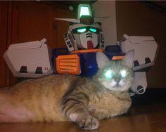 【情報】《貓咪啟動的瞬間》我是機動戰士喵彈也要跟你說嗎?ΦωΦ @幸福寵物交流區 哈啦板 - 巴哈姆特