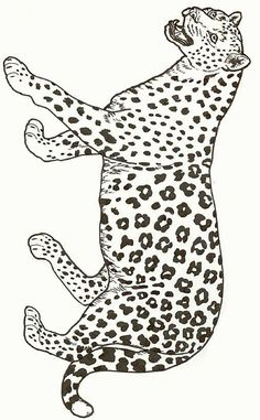 Jaguar Color Page Animal Coloring Pages For Kids Thousands Of Free Printable