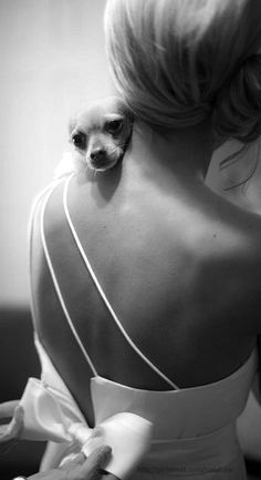 Chihuahua puppy is a part of the Wedding Day! So sweet! I'll have my snake in my wedding for sure! Chihuahua Love, Chihuahua Puppies, Chihuahuas, Dream Wedding, Wedding Day, Wedding Bible, Wedding Dresses, Gown Wedding, Bridal Gowns
