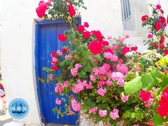 - Zorbas Island apartments in Kokkini Hani, Crete Greece 2020 Cooking Courses, Greek Cooking, Out Of The Closet, Crete Greece, Spring Break, Floral Wreath, Island, Vacation, Holiday