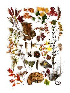 colorful autumn (maery jo hoffman)