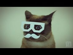 oh it's a dubstep cat video.  that's about it.