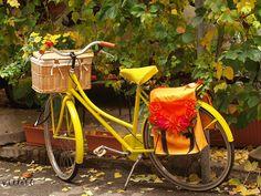Sunny bike