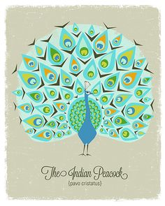 The Indian Peacock Print by automatte on Etsy