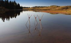 TEMPTATION OF THE ELEMENT Installation with hazel's sticks and apples - 2011 - by Marco Nones - photographie Eugenio Del Pero - Fiemme Valley - Lavazé Lake - Dolomites Trentino