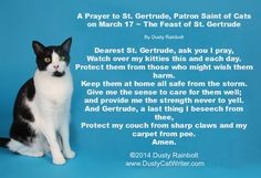 March 17 is St. Gertrude's Day--the Patron saint of Cats Crazy Cat Lady, Crazy Cats, Patron Saint Of Cats, Oh The Humanity, Young Animal, Cat Quotes, Cat Sayings, Feral Cats, All About Cats